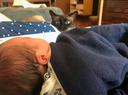 gatos e bebês