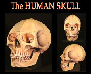 halloween-human-skull-papercraft