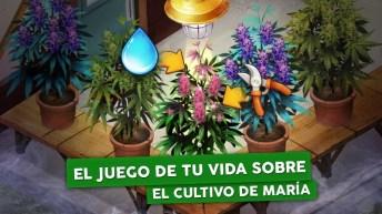 Hempire - Weed Growing Game APK MOD imagen 1
