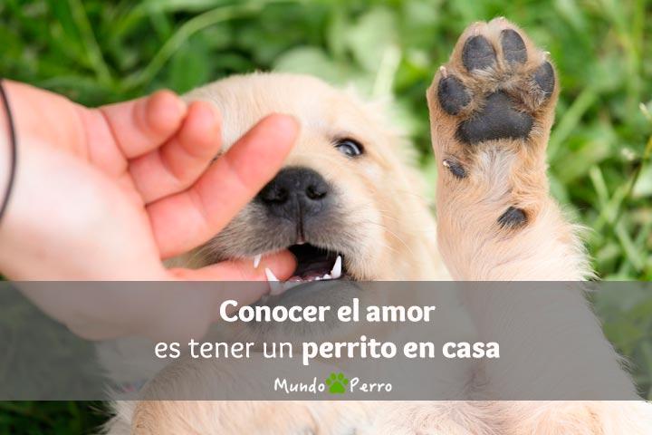 Frases De Perros En Adopcion Mundo Perro