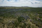 O jardim da Mongólia está florido