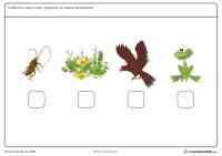 Cadena Trofica Para Colorear Unidad 4 Ecosistemas
