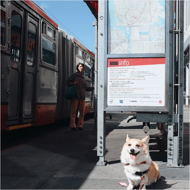 sneakers the corgi muni