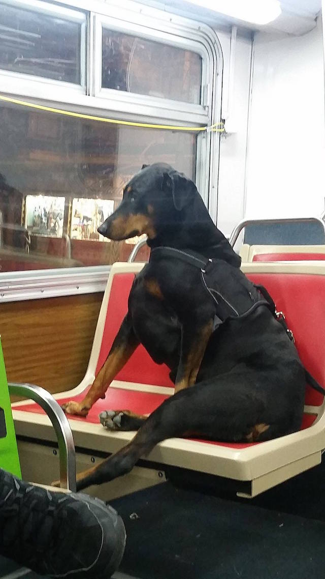 service_doggie