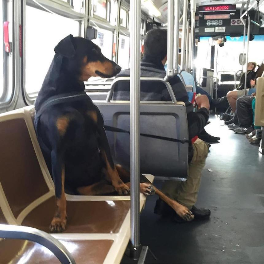 dog sitting perfect muni diaries by thrifteye