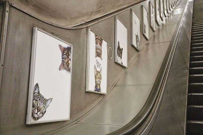 cat-london-tube-escalator