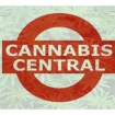 Cannabis Central: Pot Stocks Are DOWN 20% YTD But These 11 Are UP 36% YTD