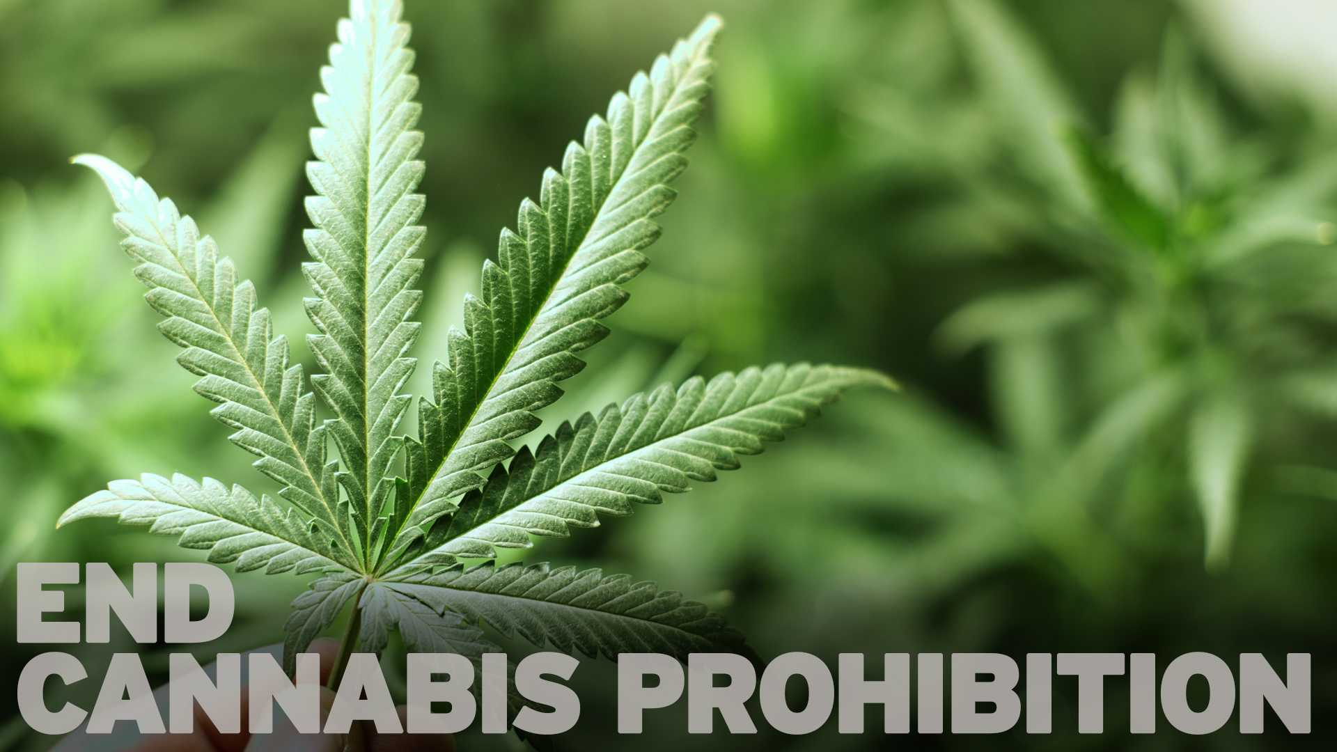 Image result for End Cannabis Prohibition