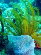 Algen: reiche Nährstoffe Quelle
