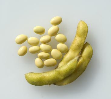Sojabohnen: Eigenschaften, Nutzen als Nahrung