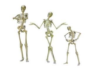 Unsere Knochen und ihre Pflege