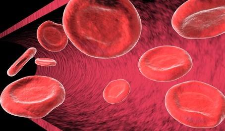 Blutgruppe und Ernährung
