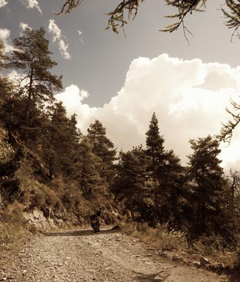 Bike amid pine trees and fluffy clouds