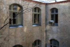 Thin branches from a tree reach out across a narrow courtyard, glassless windows on the other side are blurred through bokeh