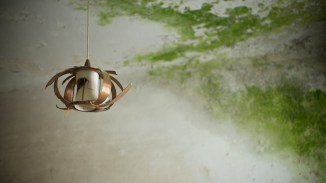 The last remains of a rotten lampshade hang on to their fixture for grim death while green decay claims the ceiling above