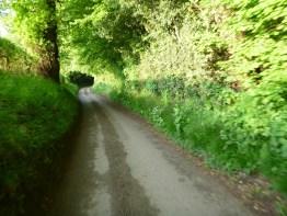 Single track road follows hedgerows into leafy woodland