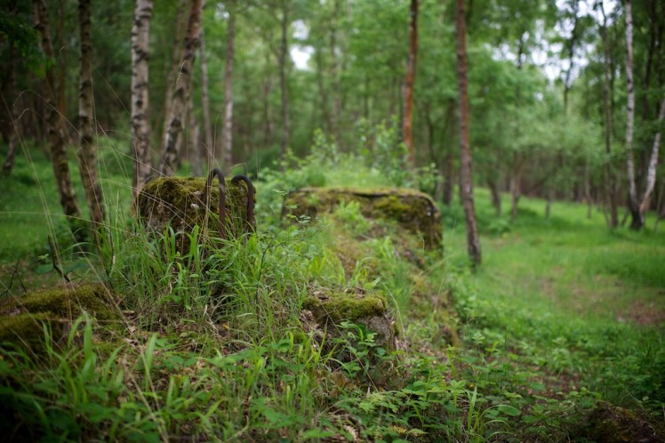 The remains of a small concrete structure are slowly being swallowed by vegetation