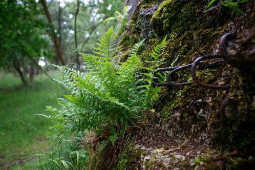 Ferns and lichens grow freely amongst rusted iron bars sticking out of the end of a crumbling concrete wall