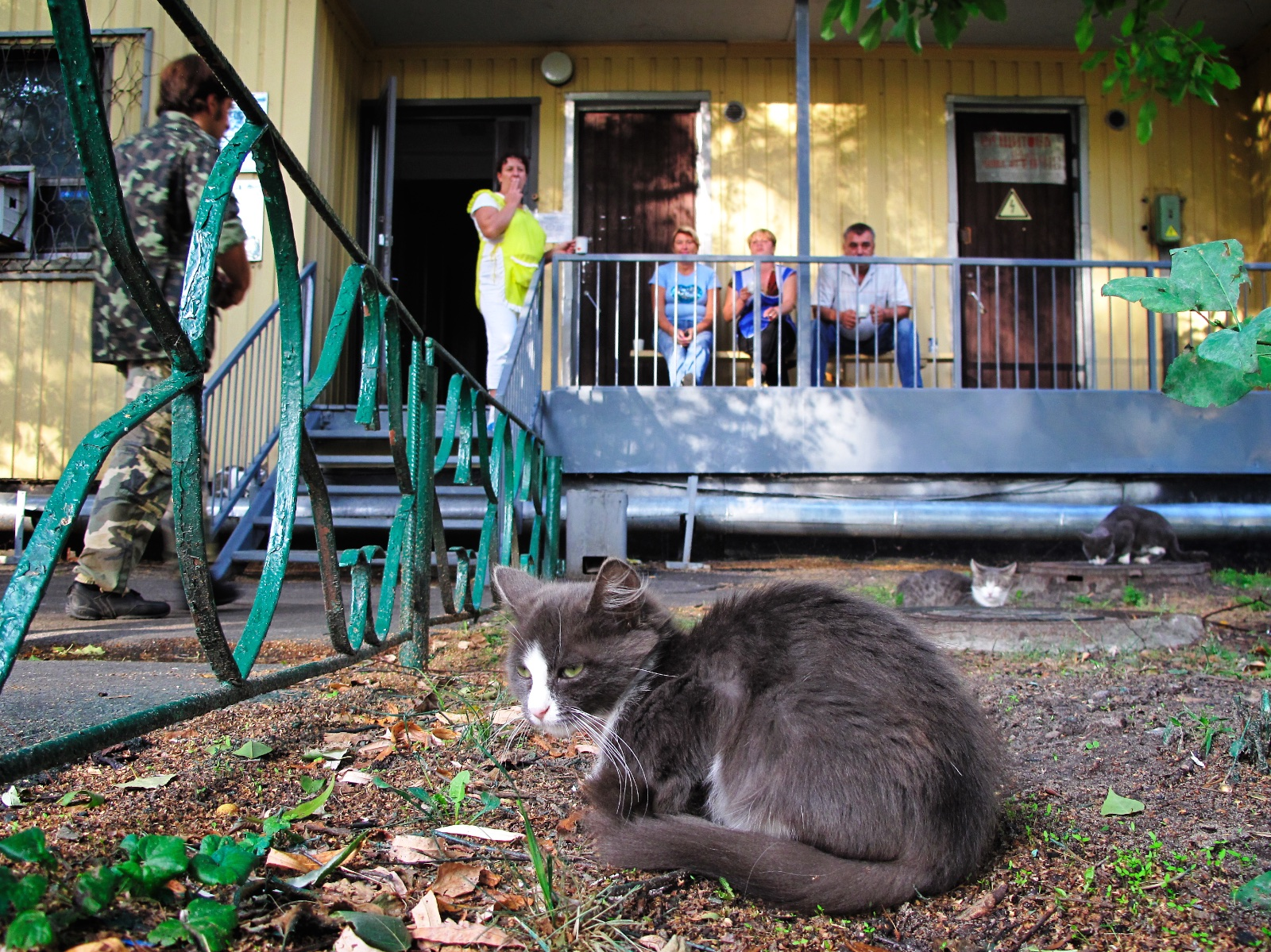 A bored looking cat sits in front of some workers on the verandah of a single storey building