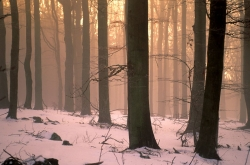 Fotomural Bosque Nieve Chulo bosques