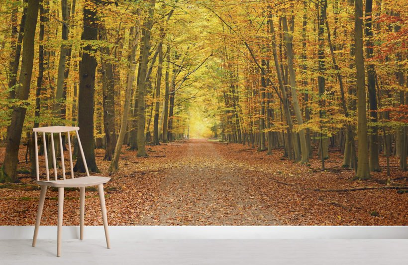 3d Fall Ceiling Wallpaper Autumn Pathway Tree Wallpaper Wall Mural Muralswallpaper