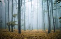 Misty Morning Forest Wallpaper Wall Mural