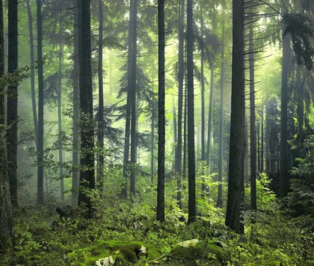 Mysterious Spring Forest Plain Wall Murals