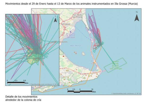 Siguiendo a los cormoranes moñudos para evaluar las áreas marinas protegidas del levante - 2, Foto 2