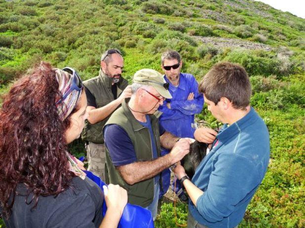 Siguiendo a los cormoranes moñudos para evaluar las áreas marinas protegidas del levante - 3, Foto 3