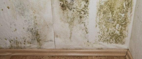 Schimmel op muur oorzaken en hoe schimmels verwijderen