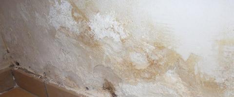Salpeter verwijderen bij vochtige muren  Online advies