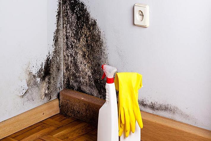 comment nettoyer les moisissures dans