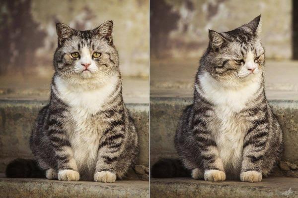 sabirli-kedi