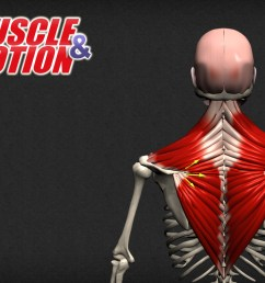 understanding the anatomy of human muscles choose the best app for you strength training anatomy posture yoga  [ 1024 x 768 Pixel ]