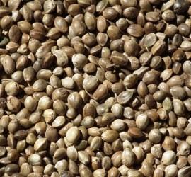 The Top 6 Benefits of Hemp Seeds