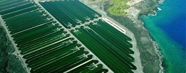 spirulina-farm-aerial