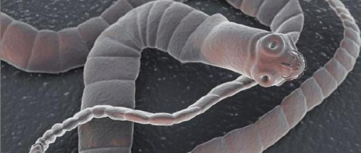 tapewormhead