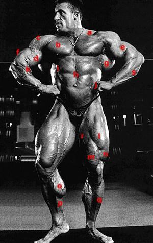 Planche anatomique avec Dorian Yates (déploiement de face)