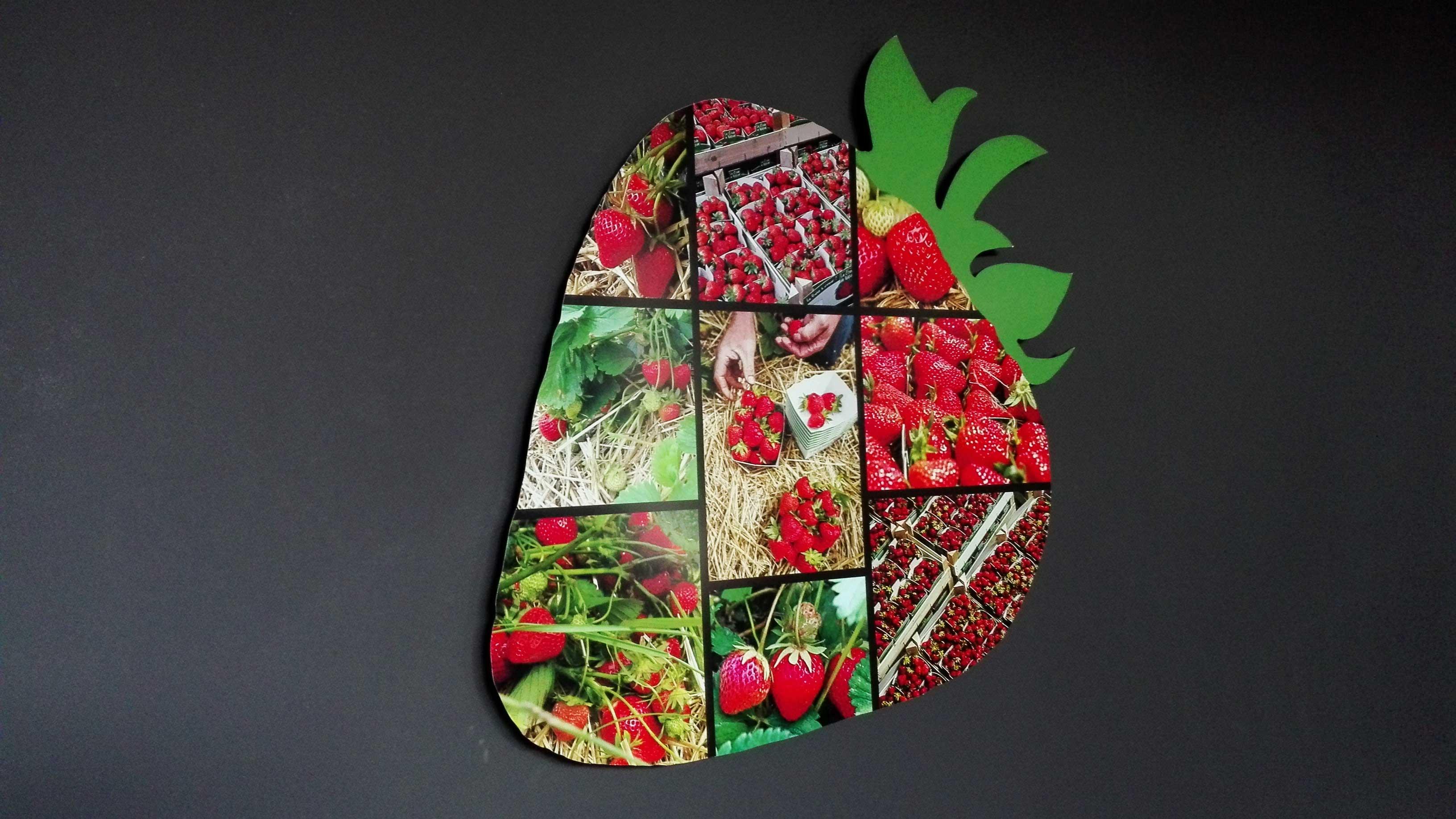 fraise wepion cueillette