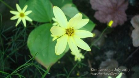 small star flower