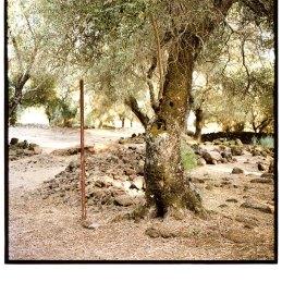 n.83 Nicola Baldazzi Senza Titolo, Pozzo Sacro di Santa Cristina, Oristano, 2019, C-print 18x18cm da negativo 6x6