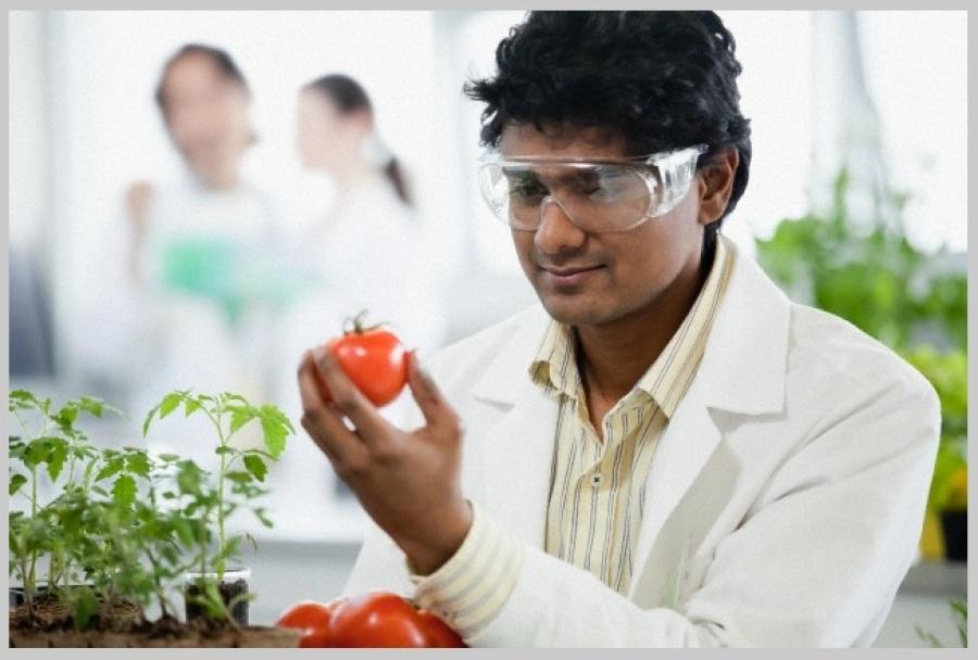 Tecnólogo em Alimentos