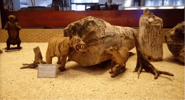 harimau, rusa, fossil kayu