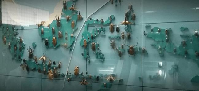 peta kumbang diawetkan