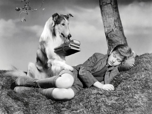 Best animal actors: Lassie
