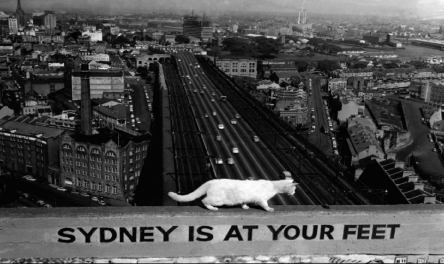 The Cats of Sydney Harbour Bridge