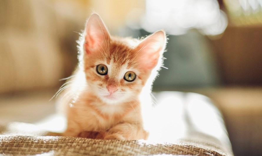 Kitten Overboard