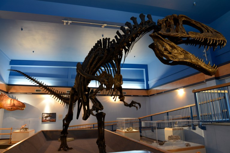 Acrocanthosaurus on display at the Museum of the Red River. (Front View)