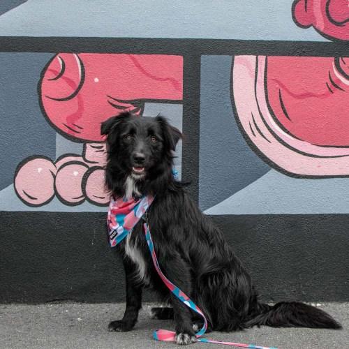 Mesh Dog Bandana - Pink Print and Dog Lead - Pink Print