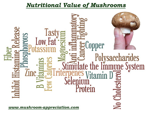 Image result for Benefits of Mushroom